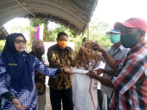Walikota Tual serahkan bibit rumput laut kepada para petani rumput laut Dusun Vatraan